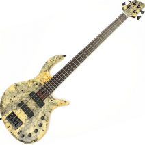 Elrick Gold e-volution 4 strings Buckeye Top